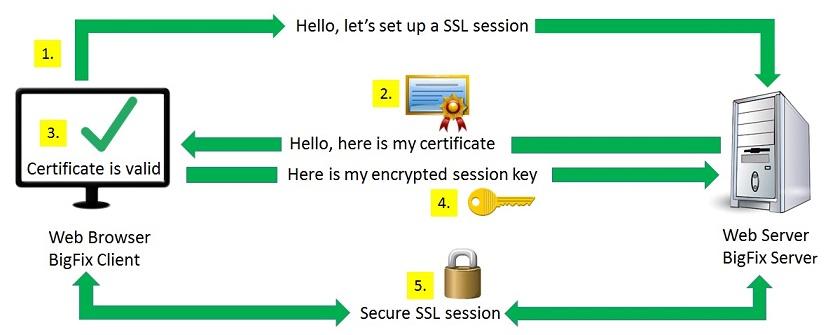 Cos'è un certificato SSL dfgt